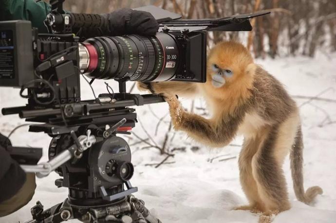 电影从业者,值得一看的影片,《我们诞生在中国》观影手记