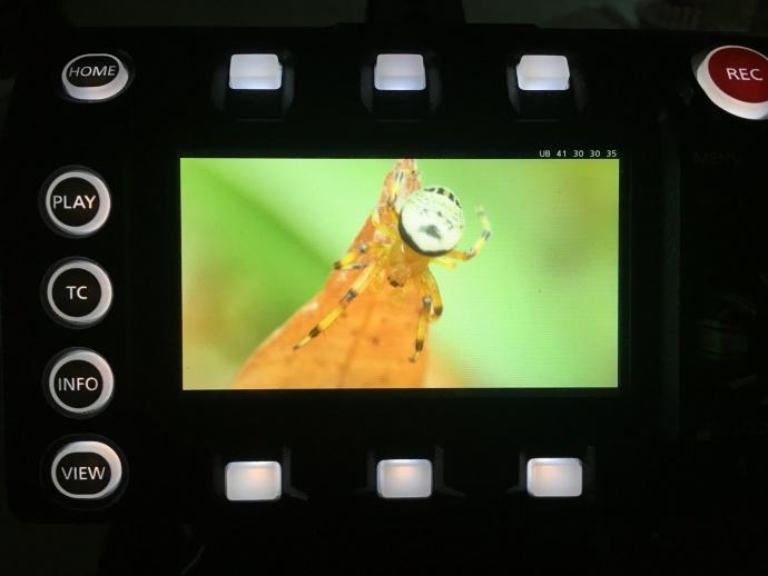 松下VariCam LT拍摄微距,感受强大的原生ISO 5000!