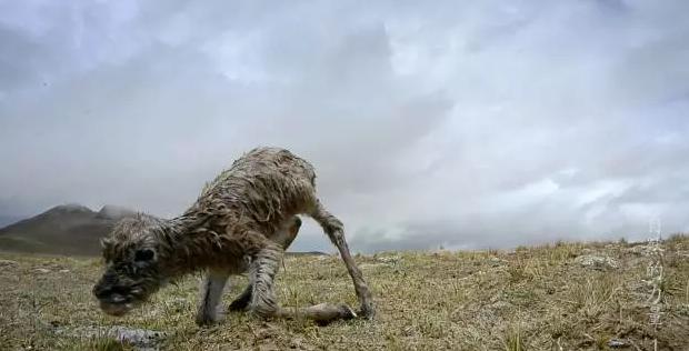 5年50万公里拍摄,成就央视纪录片巨制《自然的力量》