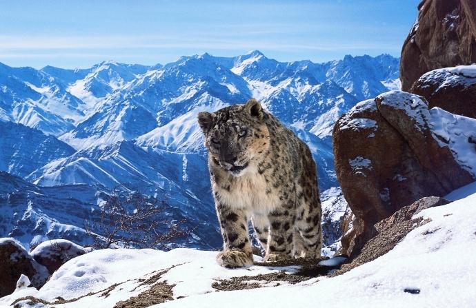 野生动物摄影师的自白,解析BBC如何拍摄野生世界