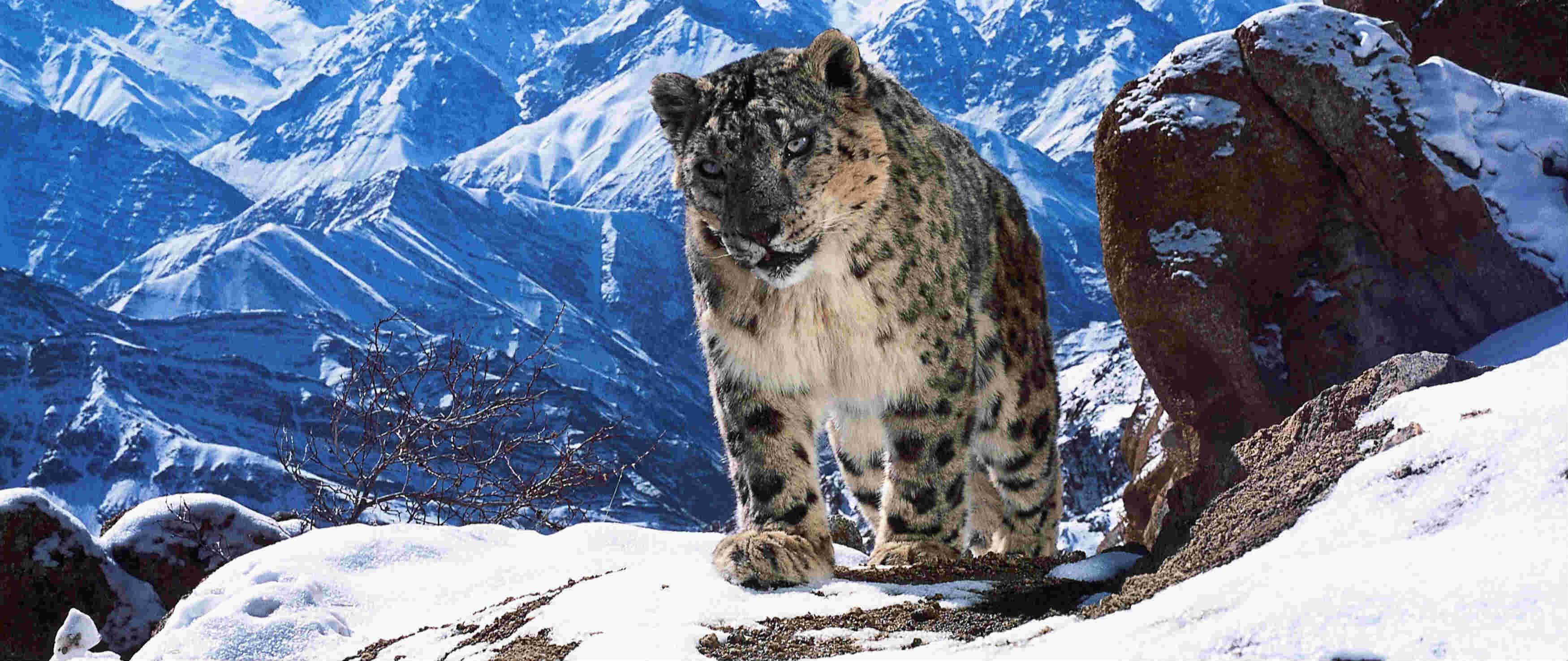 这是世界上最令人尊敬的拍摄,来自BBC野生动物摄影师的自白