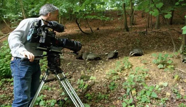 【海外分享】理查德·霍普金斯摄影师用Varicam LT来捕捉獾的罕见镜头