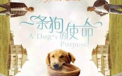 中国金主们这些年买的外国电影版权如今都是何结局?