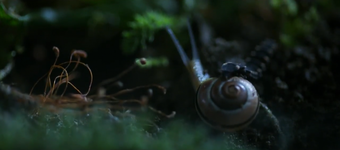 就一只蜗牛,《美国国家地理杂志》硬给拍成了好莱坞商业片!