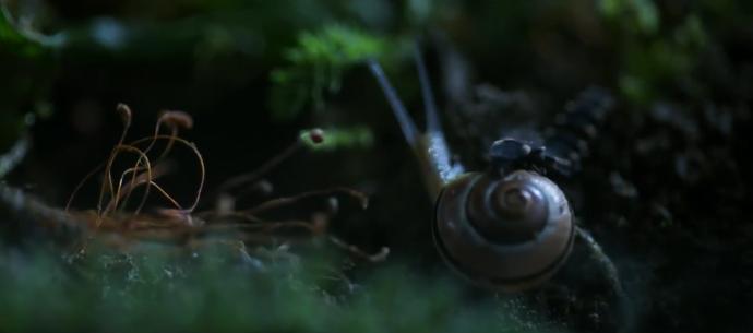 "NAT GEO WILDxRED—""微观世界""里的蜗牛历险记"