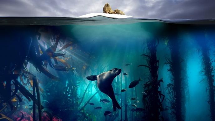 4年制作、6000小时水下拍摄,豆瓣9.9高分的BBC《蓝色星球2》的幕后故事