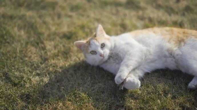星云5100斜角海外随拍分享|此处有萝莉和猫出没!!